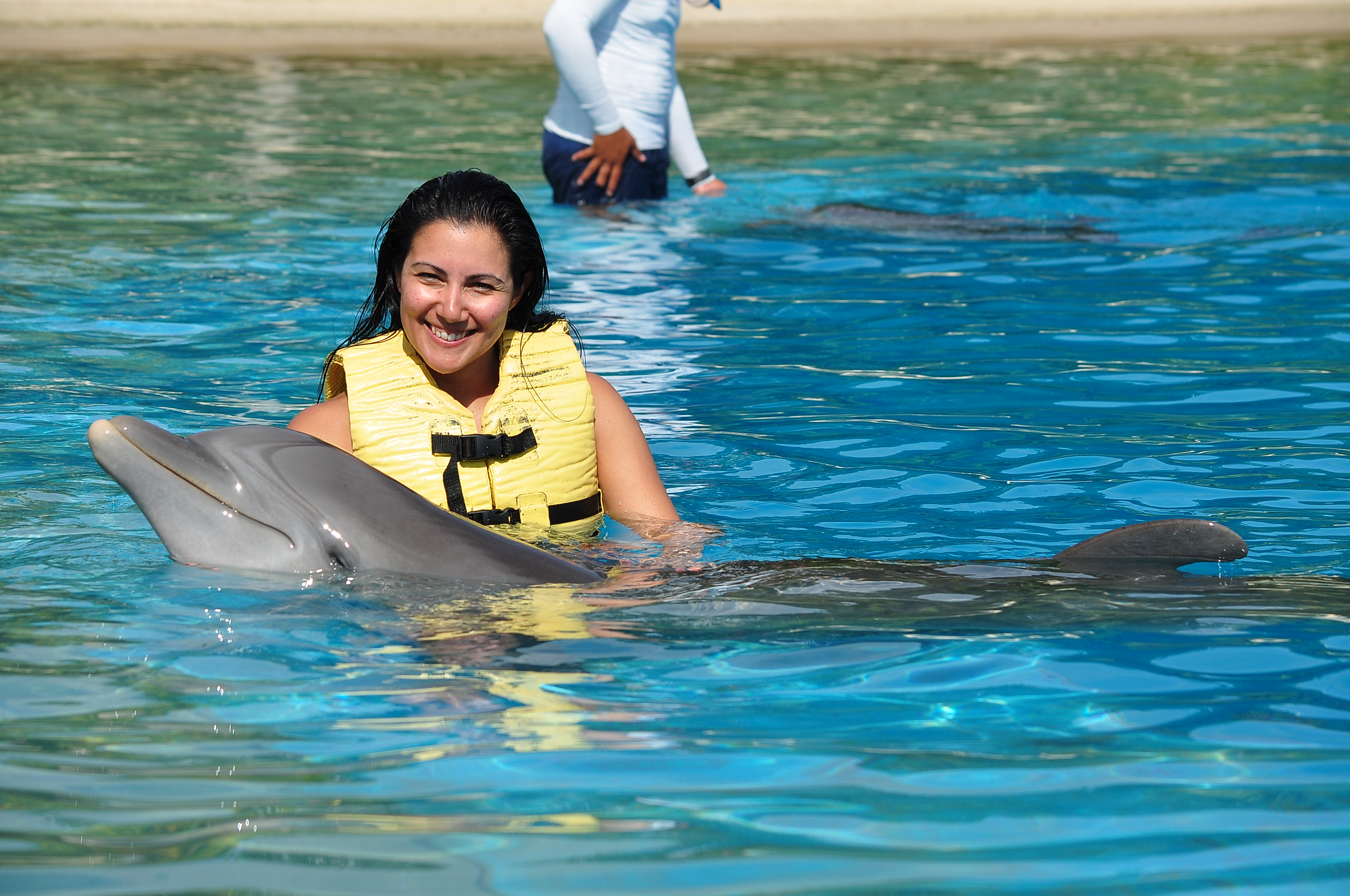 Swimming with dolphins: An incomparable experience