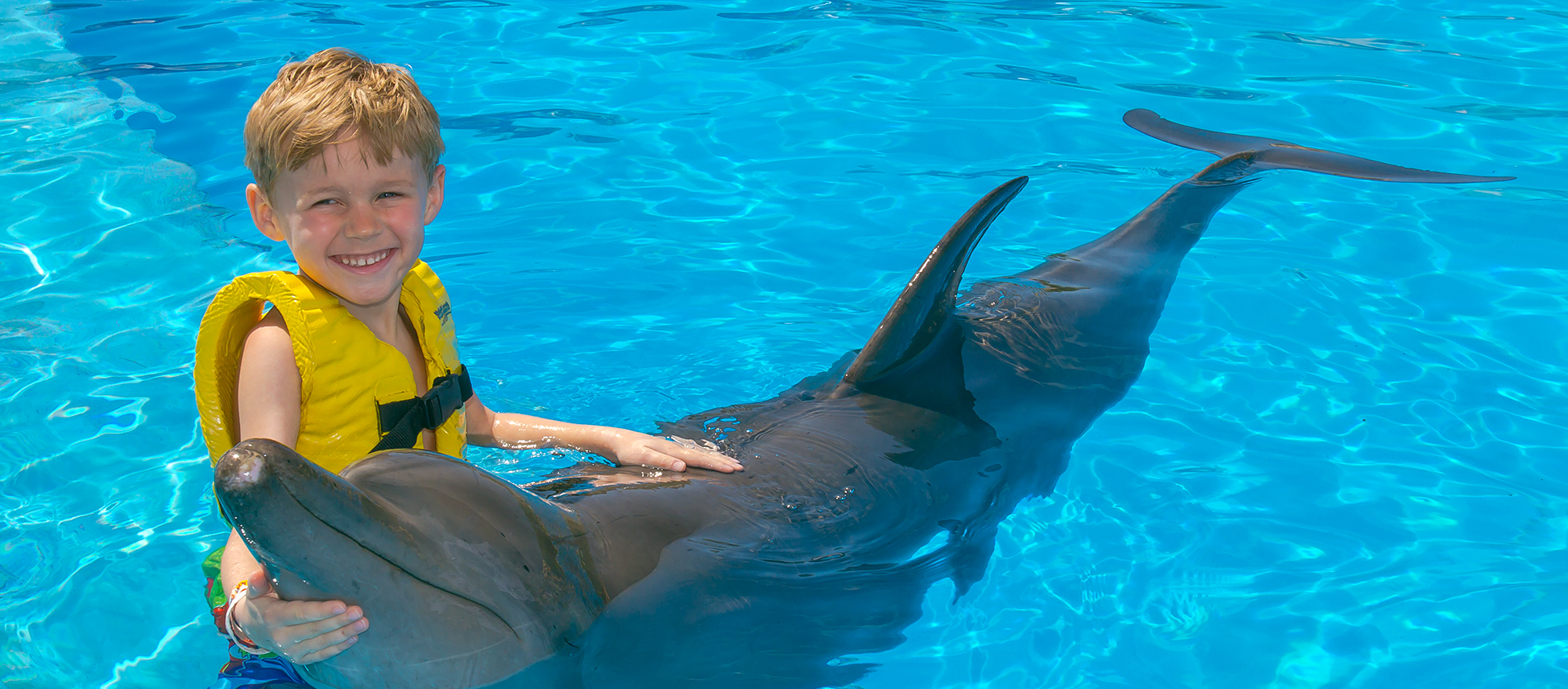 Swimming with dolphins, a unique experience for enjoying Cancun