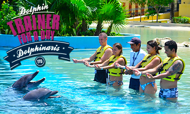Swim with dolphins - Trainer For a Day in Riviera Maya Spring Break deals
