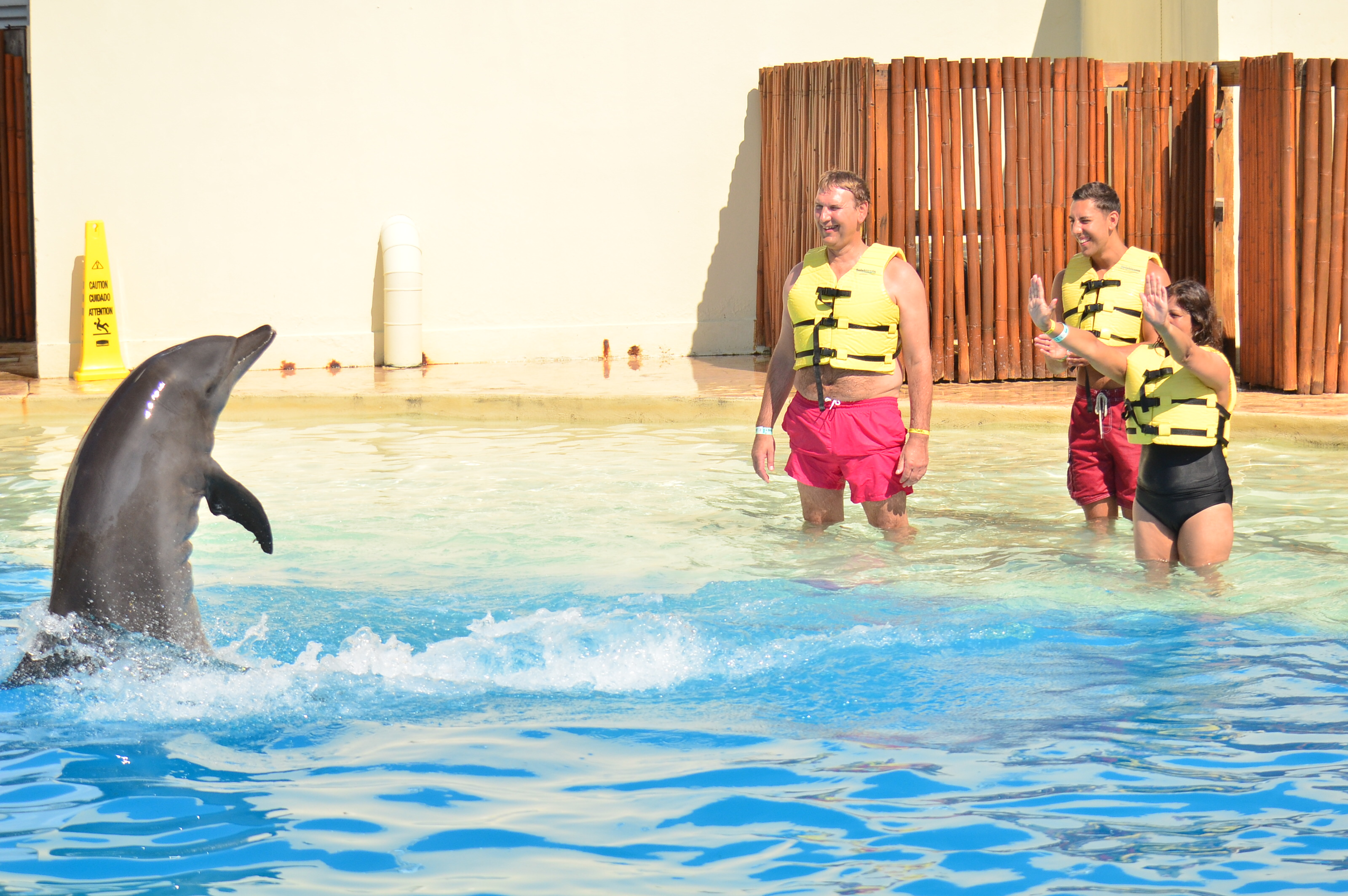Two great swimming with dolphins programs to check out