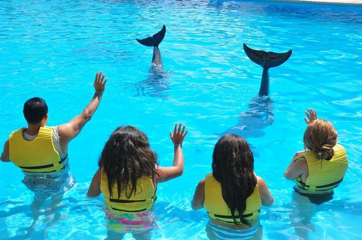 Conoce cuáles son los programas educativos de Dolphinaris