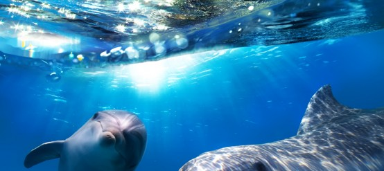Swim with Dolphins in Tulum