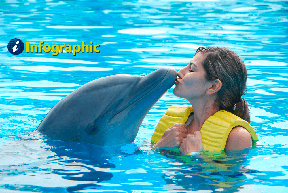 Make your dream come true: Swim with the dolphins