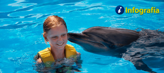 ¡Conoce las características de los delfines!