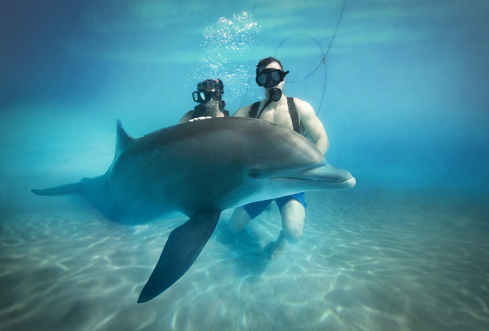 Interacción con delfines, un plan perfecto para realizar en familia