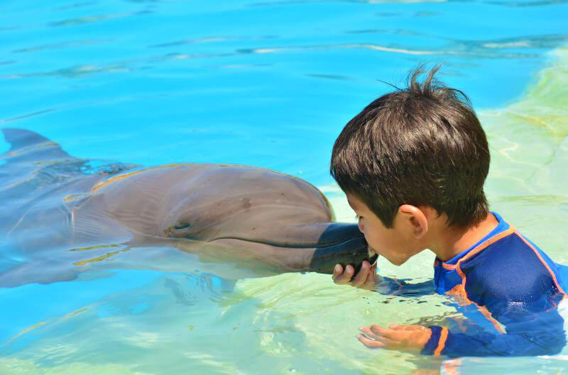 Swim with dolphins and live magic moments
