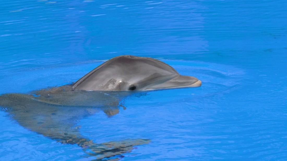 Delfines en la Riviera Maya.