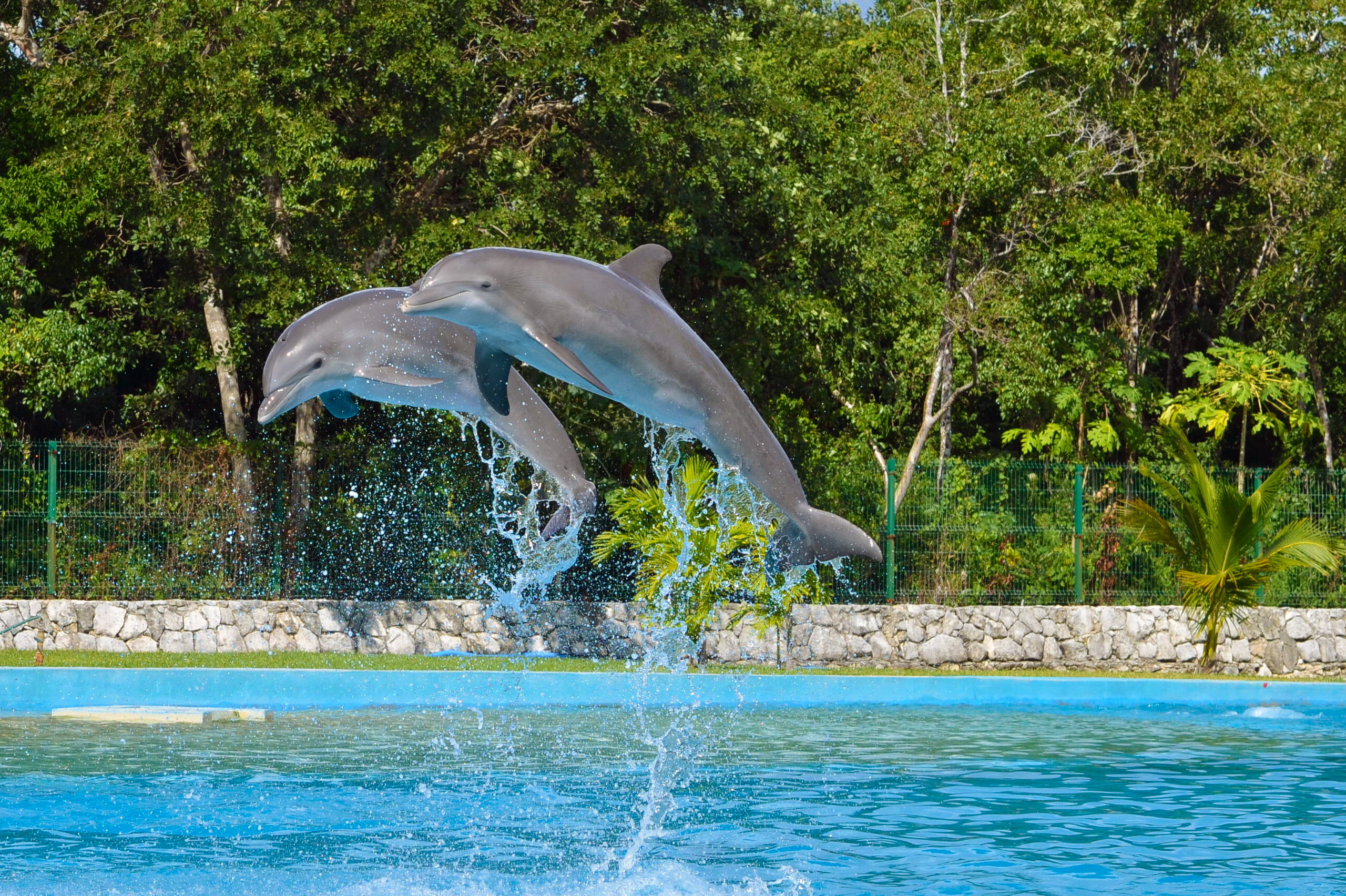 Friendly and fun, dolphins facts will amaze you