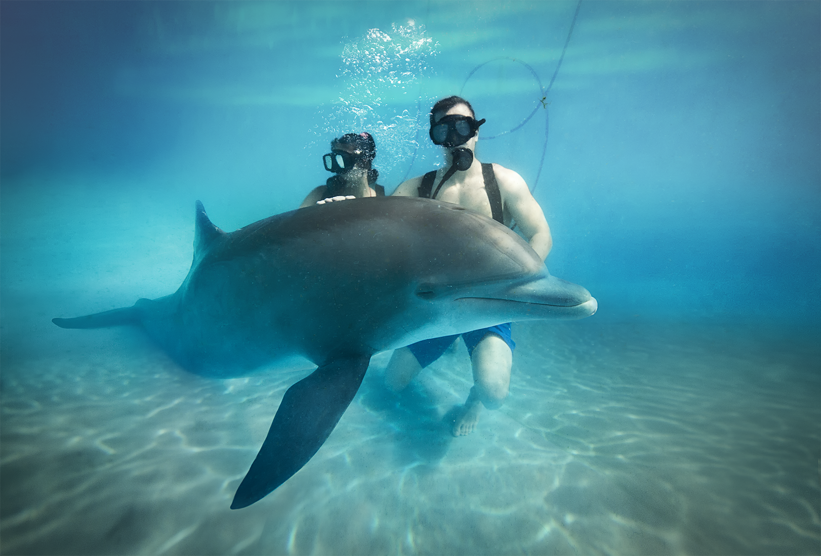 Swim with dolphins, perfect family plan at Riviera Maya