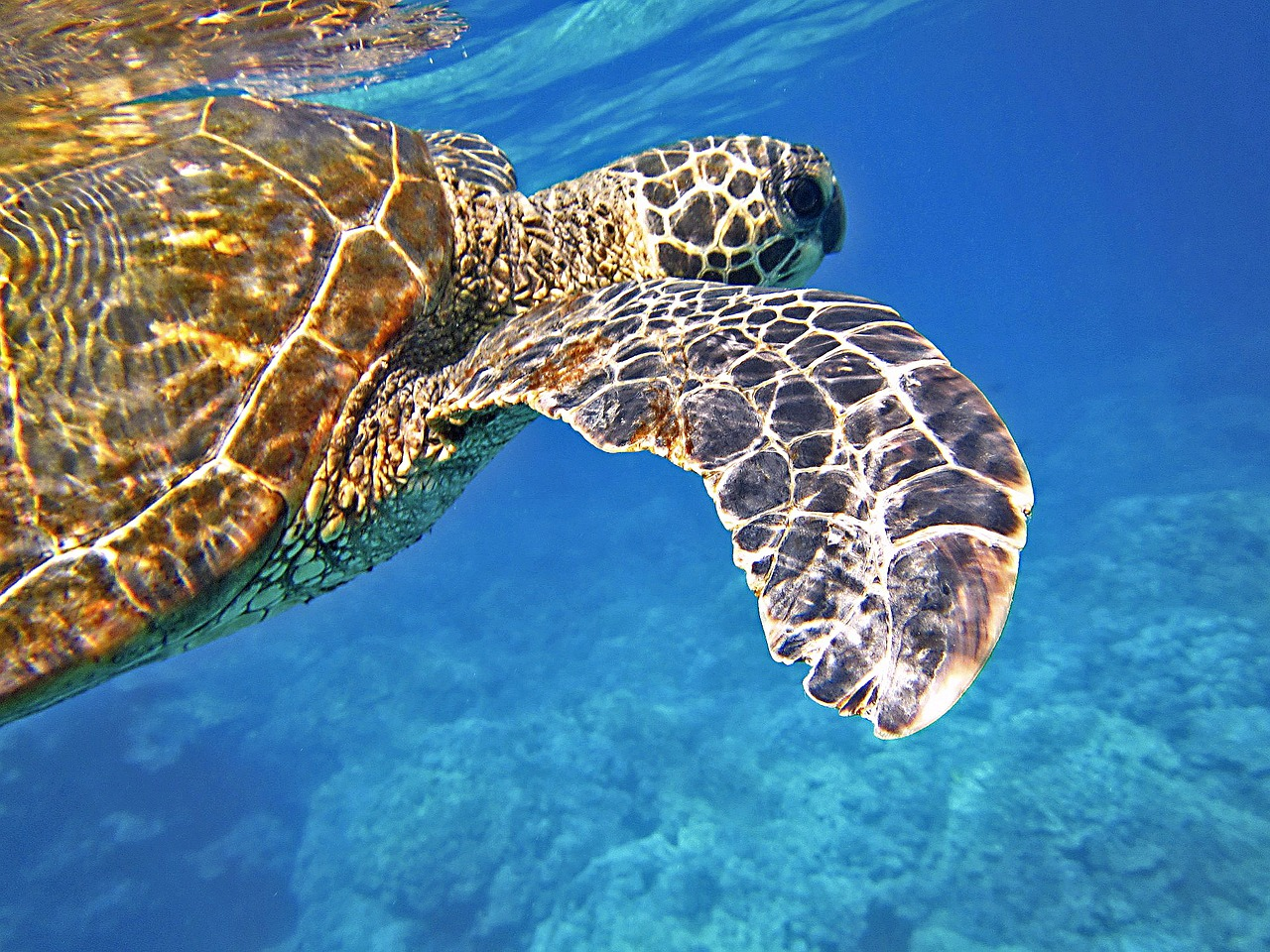 Land of Turtles (and humans): Akumal