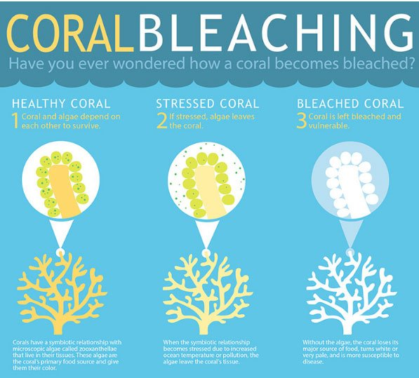 Coral Bleaching Infographic by NOAA - How Marine Pollution Affects Sea Life