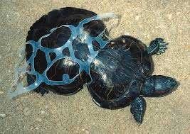 Sea Turtle Damaged by Plastic - How Marine Pollution Affects Sea Life