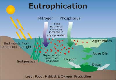 Eutrophication - How Marine Pollution Affects Sea Life